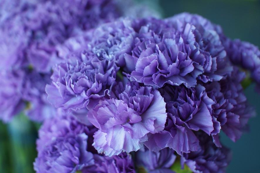 Common Flowers Georg Tremmel Shiho Fukurhara Ars Electronica Festival 2016