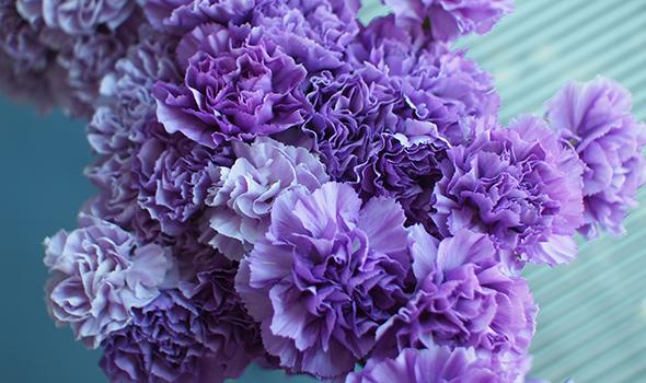 biomedia_commonflowers