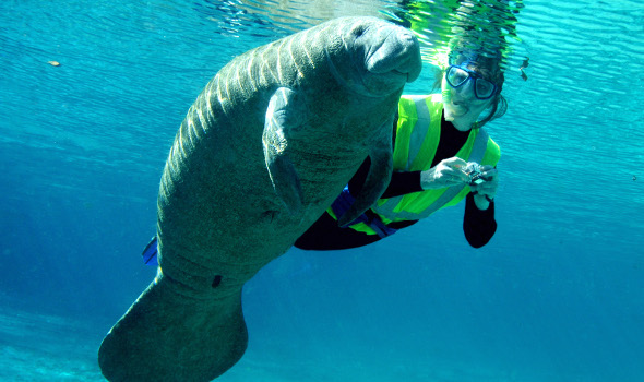 Deep Space LIVE: Manatees in Paradise