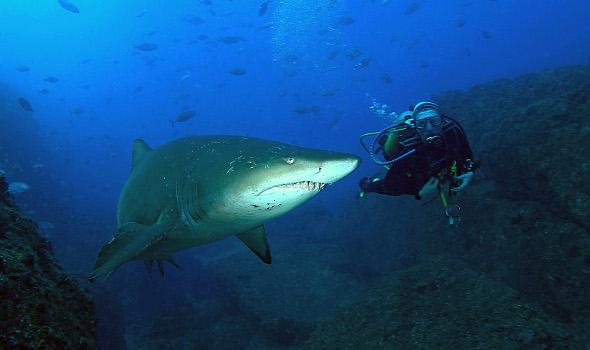 Deep Space LIVE: Haie – Älter als die Dinosaurier